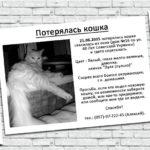 Объявление для расклейки, потерялась кошка