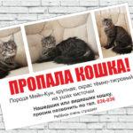 Объявление о пропаже кошки