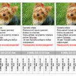 Шаблон с отрывными листочками о пропаже собаки